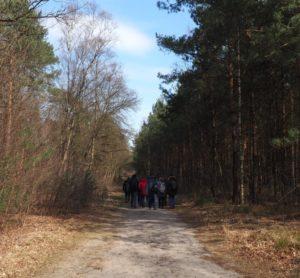Op het bospad